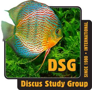 Discus Study Group