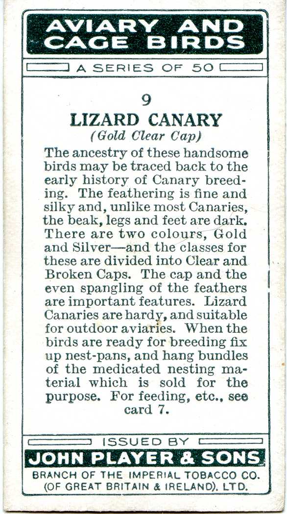 Lizard Canary — AVIARY AND CAGE BIRDS UK CARDS (1933)