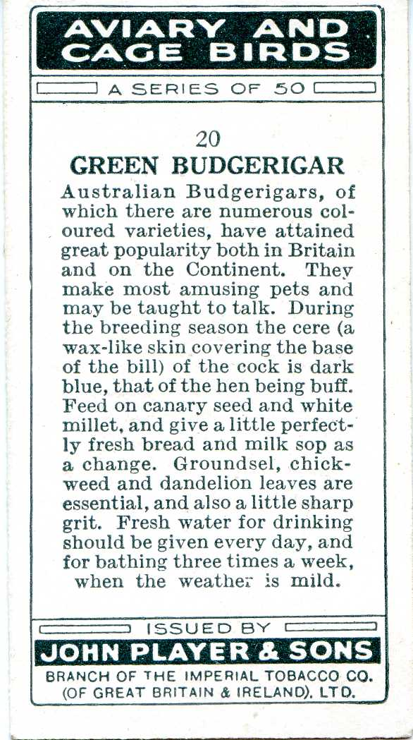 Green Budgerigar — AVIARY AND CAGE BIRDS UK CARDS (1933)