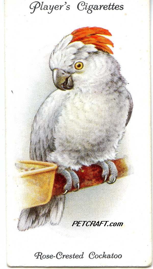 Rose-Crested Cockatoo — AVIARY AND CAGE BIRDS UK CARDS (1933)